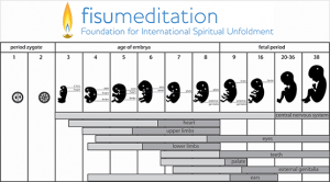 26 Fetal Stages for Meditation