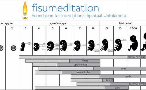 26 Fetal Stages for Meditation